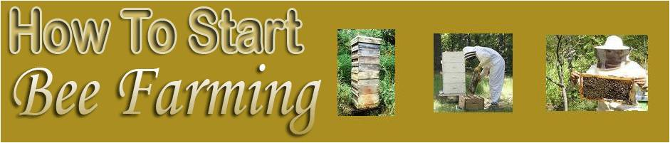 how to start bee farming bee farming for beginners